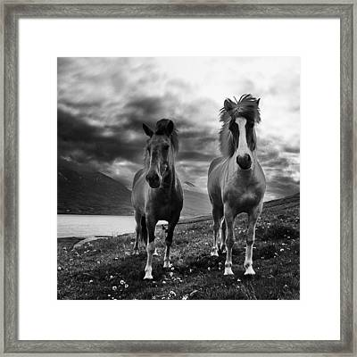Framed Print featuring the photograph Icelandic Horses by Frodi Brinks