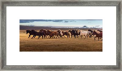 Icelandic Horses Galloping Over The Framed Print by Coolbiere Photograph