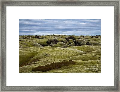 Icelandic Moss Framed Print by Miso Jovicic