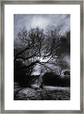Ichabod's Pathway Framed Print by Donna Blackhall