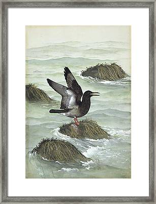 Ichthyornis Prehistoric Bird, Artwork Framed Print by Science Photo Library