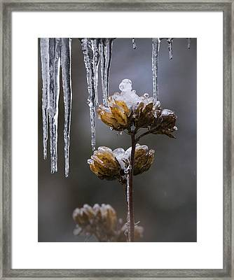 Icicles And Ice Flowers Framed Print