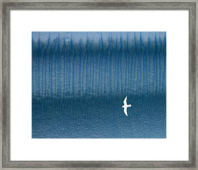 Icy Angel Framed Print by Tony Beck