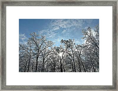 Icy Forest Framed Print