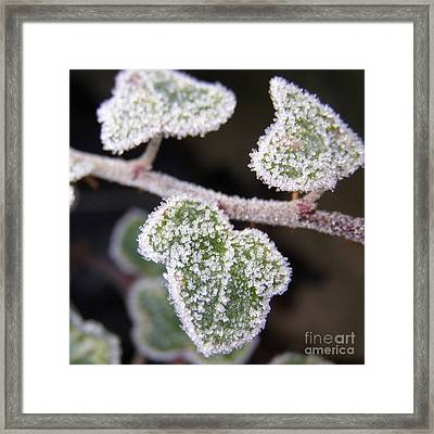 Icy Ivy Framed Print by Terri Waters