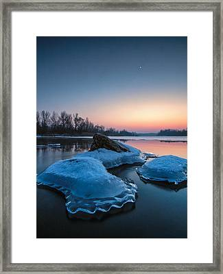 Icy Jellyfish Framed Print by Davorin Mance