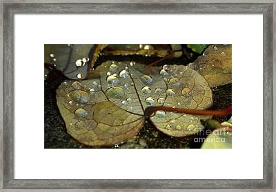 Icy Leaf Framed Print by Heather L Wright