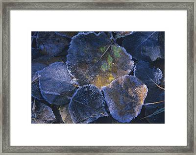 Icy Leaves Framed Print
