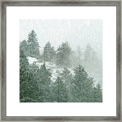 Icy Pine Forest In Colorado Framed Print