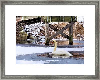 Icy Pond Framed Print by Janice Drew