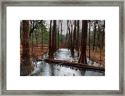 Icy River In The Bottomland Forest Framed Print by Maurice Smith