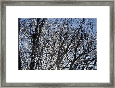 Icy Trees  Framed Print by Luther   Fine Art