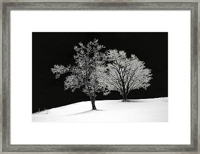 Icy Trees Framed Print by Wendell Thompson