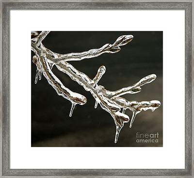 Icy Twig Framed Print