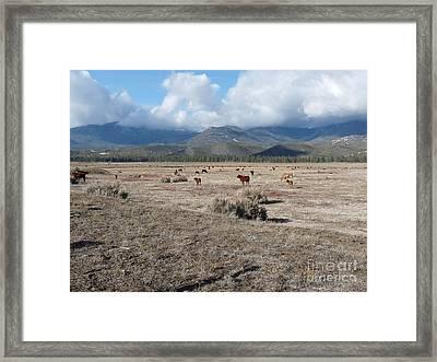 Idlewild Herd 2 Framed Print by Deborah Smolinske