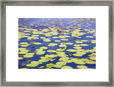Idyllic Pond Framed Print