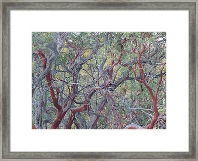 Idyllwild Red Tree Framed Print by Nora Boghossian