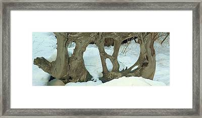 Idyllwild Tree Sculpture Framed Print