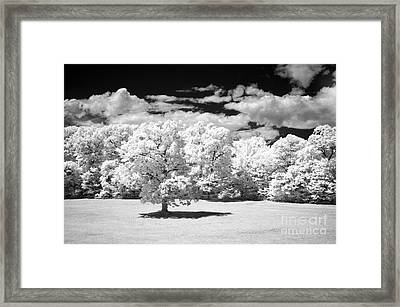 If  2 Framed Print by Alan Russo