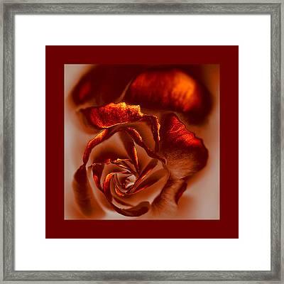 If A Rose Is A Rose Framed Print by Li   van Saathoff