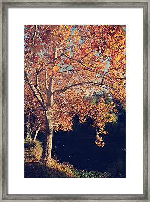If Wishes Were Trees Framed Print by Laurie Search