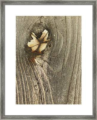 Framed Print featuring the photograph If Wooden Angels Could Fly by Marie Neder
