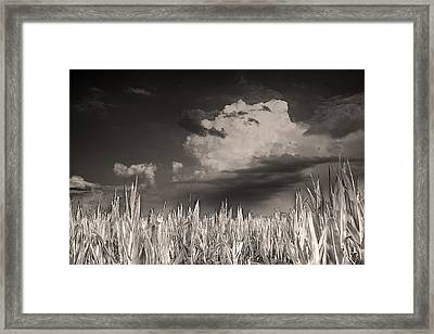 If You Build It He Will Come Framed Print by William Fields