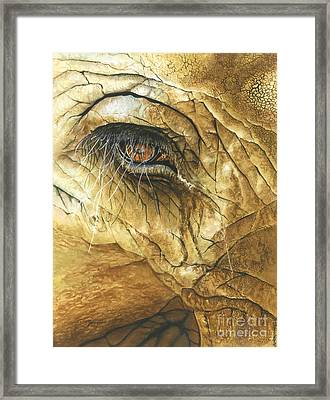 If You Could See What I've Seen... Framed Print by Barbara Jewell