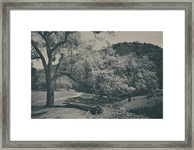 If You Get Lonely Framed Print by Laurie Search