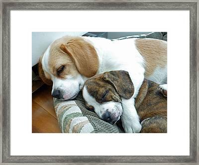 Iggy And Bogie Framed Print