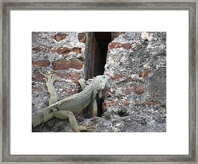 Framed Print featuring the photograph Iguana by David S Reynolds