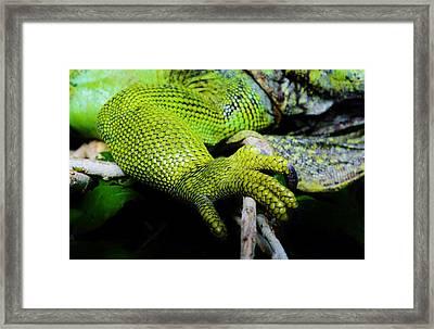 Iguana Details Framed Print by Werner Lehmann