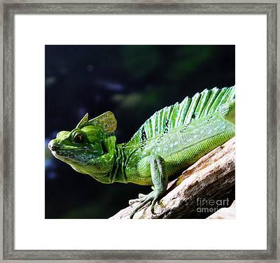 Iguana Framed Print by Kathleen Struckle