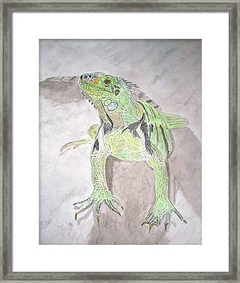 Framed Print featuring the painting Iguana by Linda Feinberg
