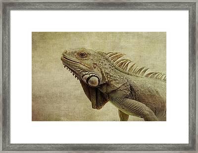 Iguana Framed Print by Marina Kojukhova