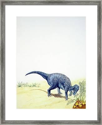 Iguanodon Dinosaur Framed Print