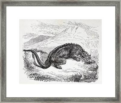 Iguanodon Dinosaur Framed Print by Paul D Stewart