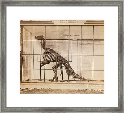 Iguanodon Skeleton Mesozoic Dinosaur Framed Print by Science Source