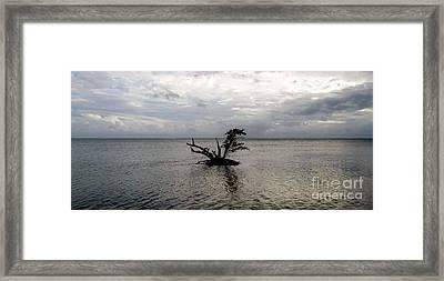 Ikebana Sunset Framed Print by Amar Sheow