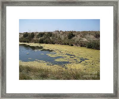 Ile De Re - Marshes Framed Print