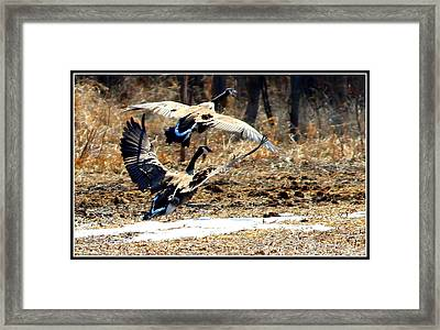 I'll Be Your Wing Man Framed Print by Sheila Werth