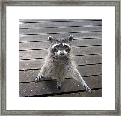 I'll Dance On One Foot For Ya Framed Print by Kym Backland