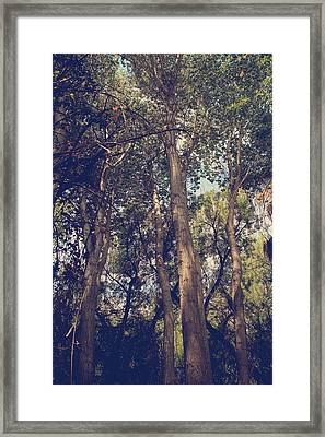 I'll Float Up Into The Wavy Trees Framed Print by Laurie Search
