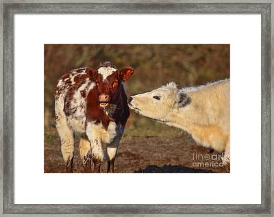 I Will Have That Bit You Missed....... Framed Print
