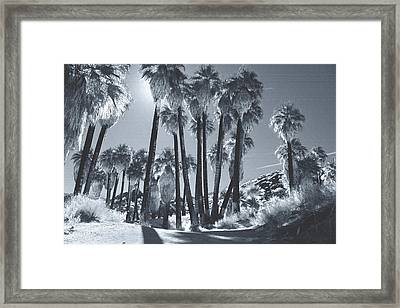 Illuminate Framed Print by Laurie Search