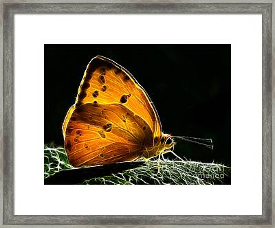 Illuminated Butterfly Framed Print by Alice Cahill