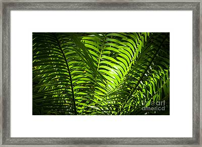 Illuminated Jungle Fern Framed Print