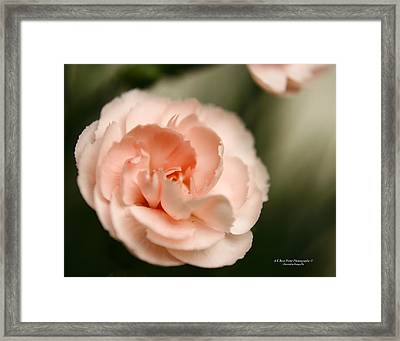Illuminated Pinkness Framed Print by Alexandra  Rampolla