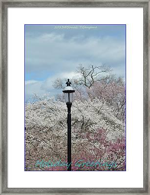 Illuminating Blossoms Framed Print by Sonali Gangane