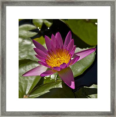 Illumination Framed Print by Brian Governale